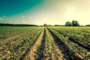 Καλλιεργημένη γη.