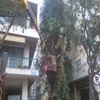 Γερανοί Θεσσαλονίκη - Κοπή Δέντρων